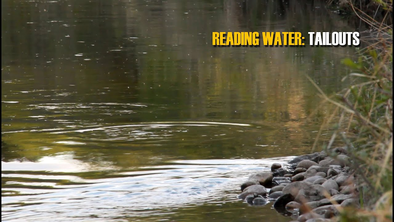 READING-TROUT-WATER-Tailouts