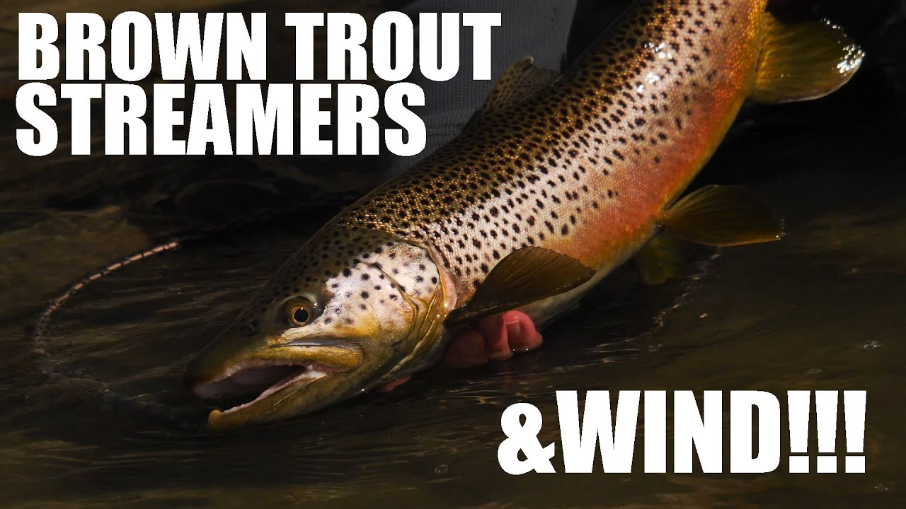 How-To-Cast-Short-Line-Streamers-into-the-WIND-for-BIG-BROWN-TROUT-Brown-Trout-Fly-Fishing