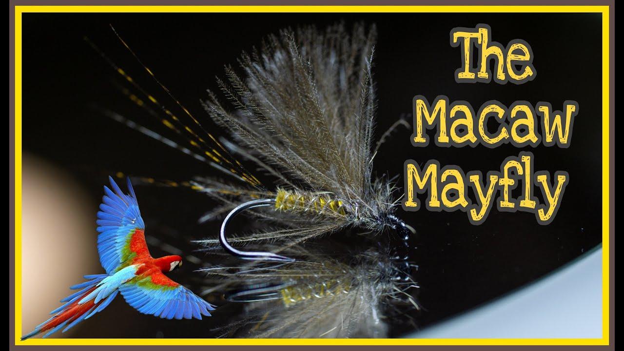 Macaw-Mayfly