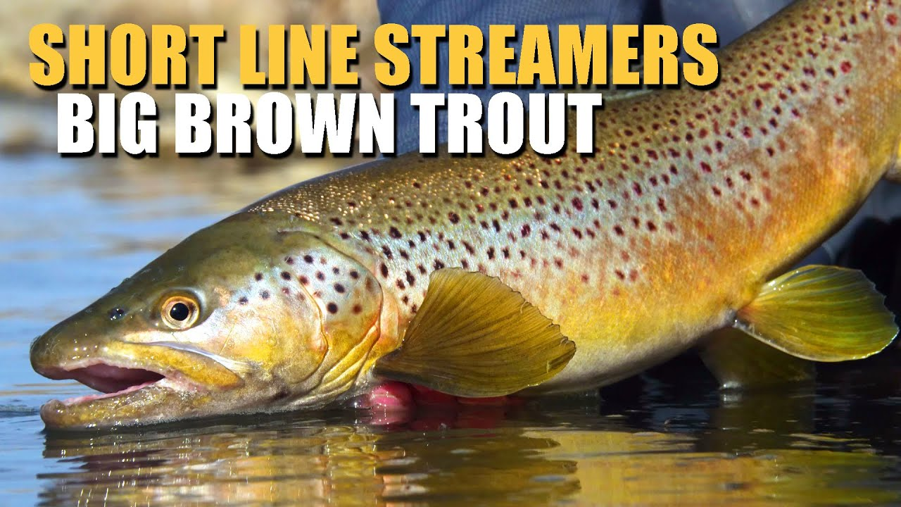Short-Line-Streamer-Fly-Fishing-Brown-Trout-Fly-Fishing-How-To-Break-Down-A-Large-River-Pocket
