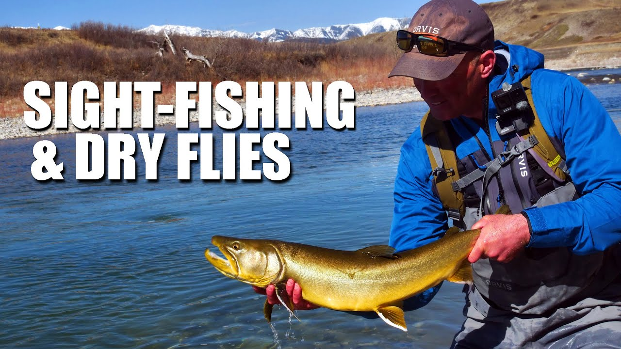 Sight-Fishing-A-BIG-BULL-TROUT-Dry-fly-fishing-Cutthroat-and-Rainbow-Trout-Fly-fishing-in-Alberta