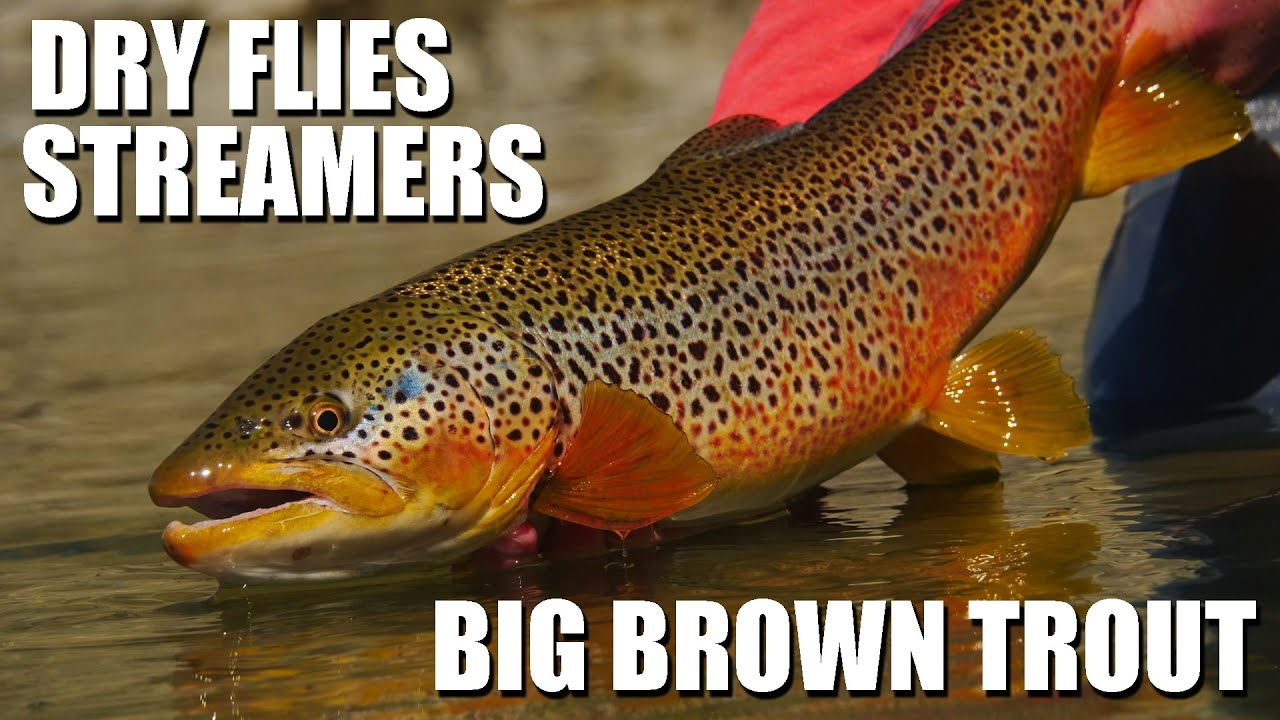 BIG-BROWN-TROUT-Early-Season-Dry-Flies-amp-Streamer-Tactics-How-to-fly-fish-dry-flies-streamers
