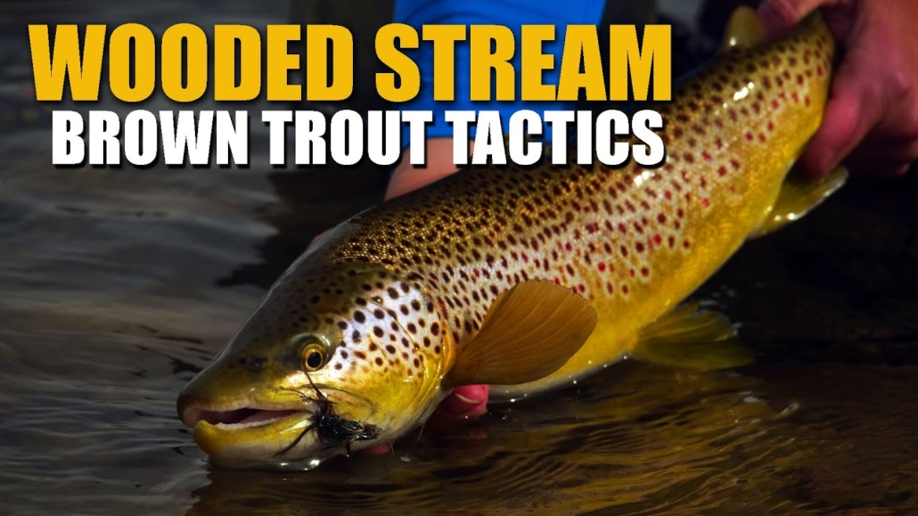 Brown-Trout-Stream-Tactics-Spring-Fly-Fishing-Dry-Flies-Streamers-amp-Nymphs-in-a-Wooded-Stream