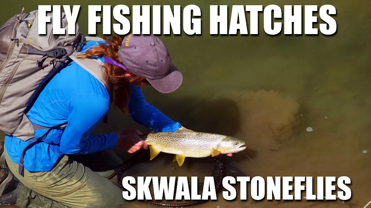 Fly-Fishing-Hatches-quotSkwala-Stonefly-Maniaquot.-Sight-Fly-Fishing-amp-Dry-Flies-for-Brown-Trout