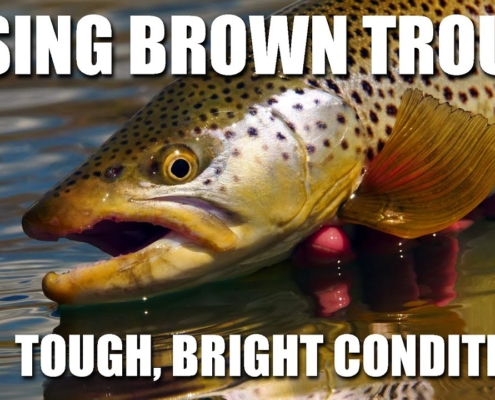 Fly-Fishing-Rising-Brown-Trout-On-FLAT-Water-in-BRIGHT-SUN.-Fly-Fishing-Brown-Trout-Tough-Condition