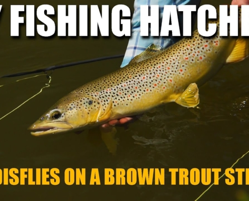 Fly-Fishing-Hatches-Caddisflies-on-a-Brown-Trout-Stream.-How-to-Catch-Brown-Trout-in-TIGHT-Cover