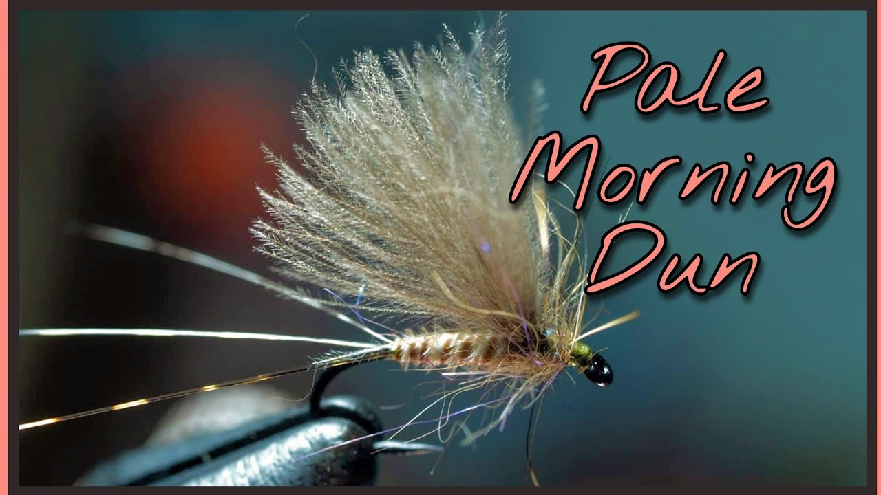 PMD-Pale-Morning-Dun-forking-three-tails-plus-working-with-peacock-biot