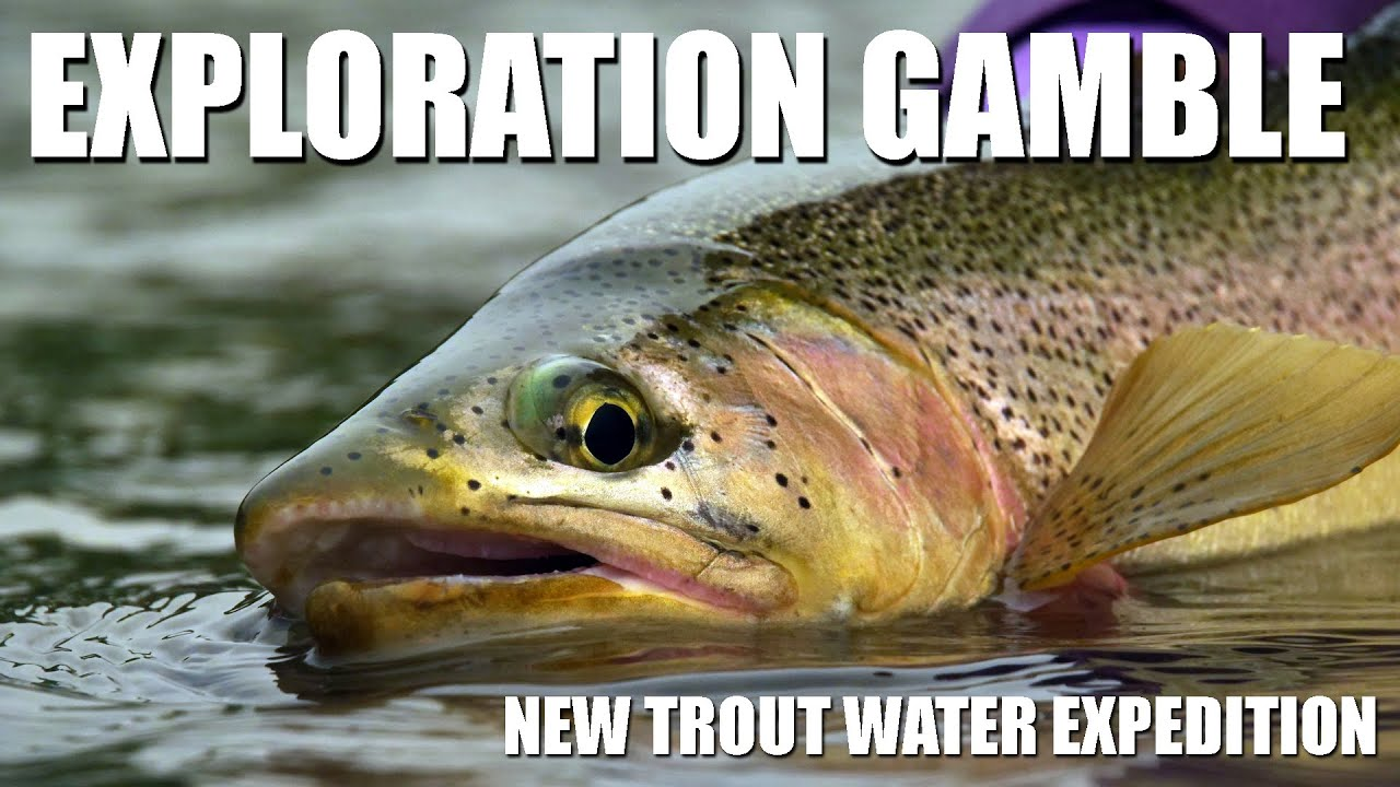 Fly-Fishing-The-Exploration-Gamble-Sticking-It-Out-amp-Reaping-the-Rewards.-Rainbow-amp-Brown-Trout