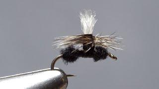 Parachute-Ant-Size-20