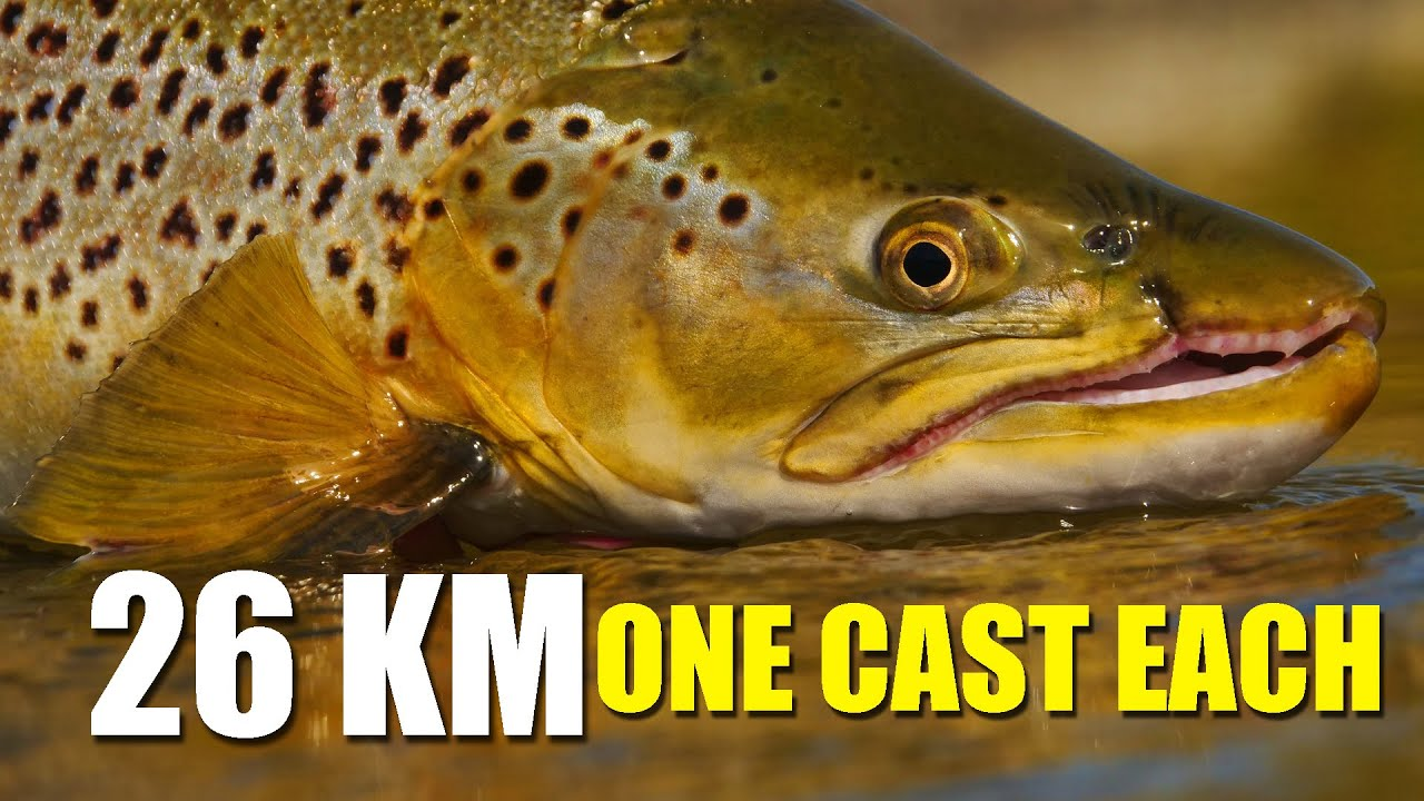 Sight-fishing-brown-trout-in-a-small-stream