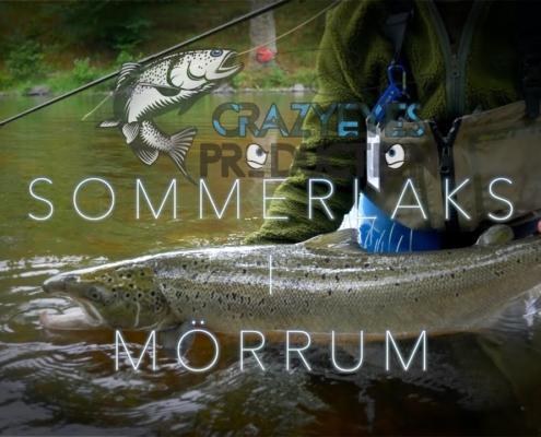 Fluefisker-Sensommer-Laks-i-Morrum