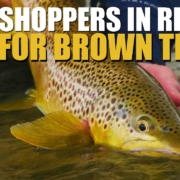 Fly-Fishing-Grasshoppers.-Peak-of-Summer-Prospecting-Riffles-with-Grasshoppers-for-Brown-Trout