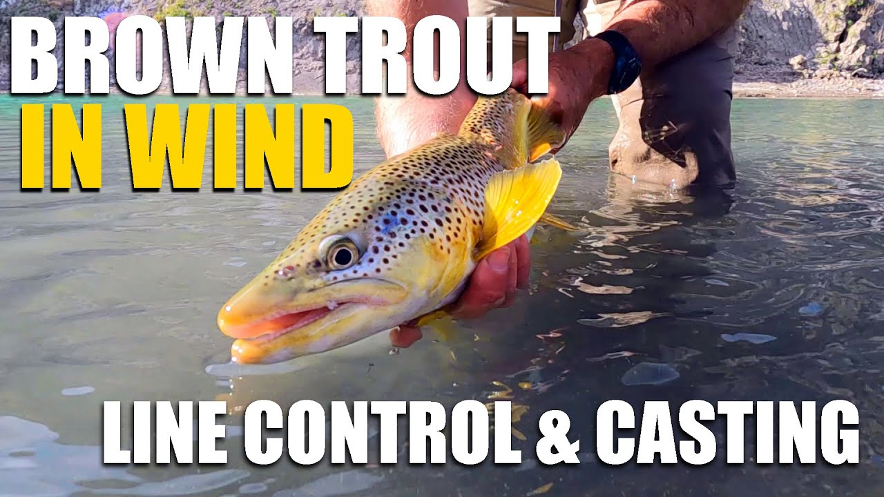 Fly-Fishing-Brown-Trout-in-WIND-Casting-Line-Control-amp-Locating-Trout-at-Peak-Summer-Conditions