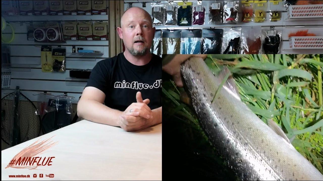 Update-uge-36-Minflue.dk-AegBaconPoelser-amp-fisketur